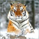 Аватары с животными - Страница 2 845259368752