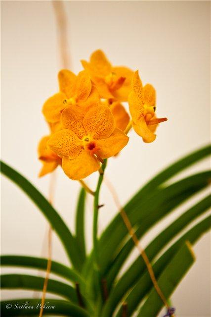 Выставка орхидей в Государственном биологическом музее им. К.А.Тимирязева 584beb678d4a