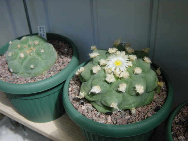 Show us  your cacti - Page 7 3e8618324e9e