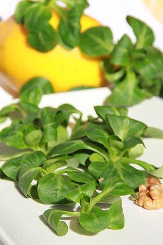 Очень полезные и вкусные листовые салаты Bce0bbf45710