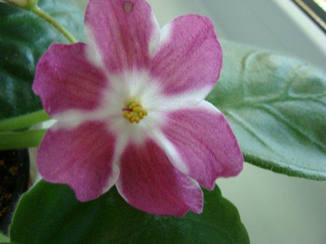 Мои цветочки - Страница 39 82955f83e2fa