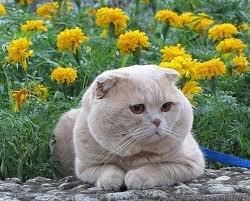 Сама по себе гулёна (о кошках) - Страница 2 47763a4a8f92