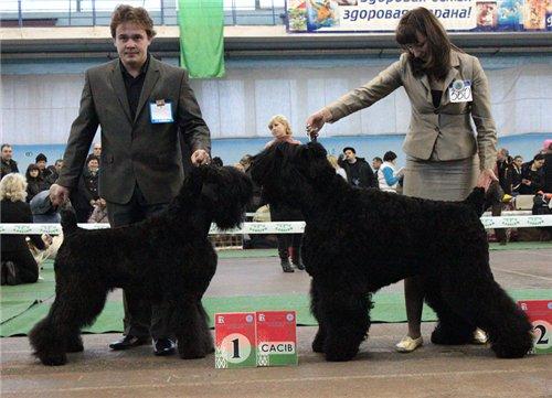 2хCACIB 26-27 ноября 2011 в Минске 9258e68bdfda