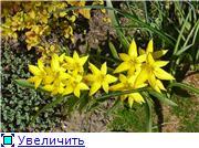 Растения для альпийской горки. 8fbb9d65bc1bt