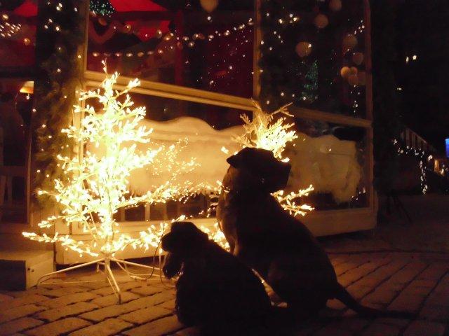 Собаки Татьяны Моисеенковой, кот Мензурка - Страница 3 Ecbd46752b26