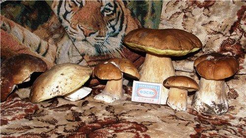"""Маринованные грибы """"Самые вкусные"""" 97086064ae47"""