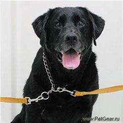 Интернет-зоомагазин Pet Gear - Страница 8 930f9094644a