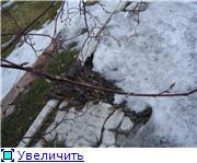 Весна идет, весне дорогу! - Страница 9 B0e0c6902496t