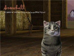 Кошки - Страница 2 A0034c01a019