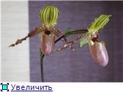 Sevgilim ( мои любимые) 508f82c3c6e4t