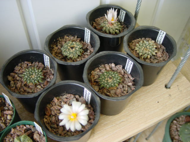 Show us  your cacti - Page 7 7caf5ecbe12c
