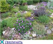 Растения для альпийской горки. - Страница 3 Dc2315be2d74t