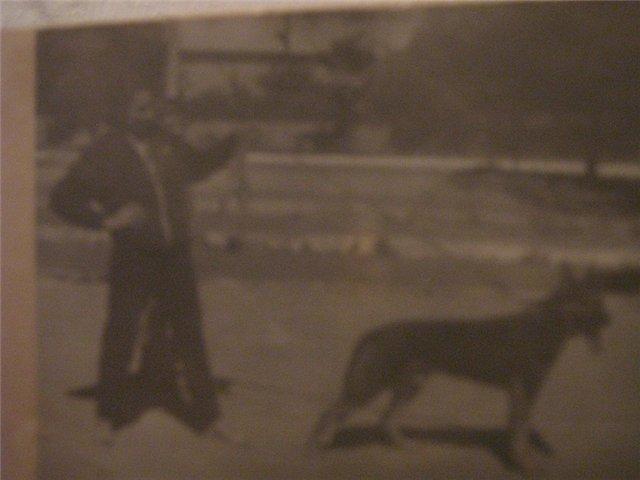 """Питомник """"Прима Персона"""". Мои собаки-моя жизнь! 901f0a8c7f31"""