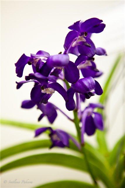 Выставка орхидей в Государственном биологическом музее им. К.А.Тимирязева 952624434bea