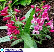 Растения для альпийской горки. - Страница 3 3e9654263eeet