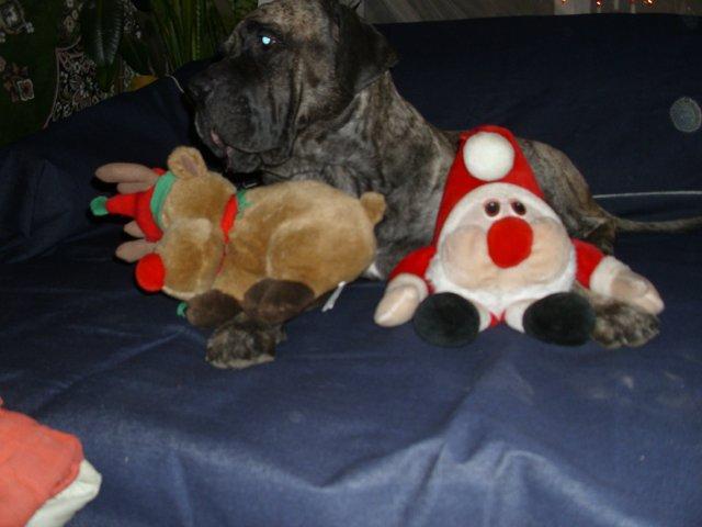 Собаки Татьяны Моисеенковой, кот Мензурка - Страница 3 C4853db0a9df