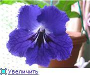 Семена глоксиний и стрептокарпусов почтой - Страница 3 C44140eb7e76t