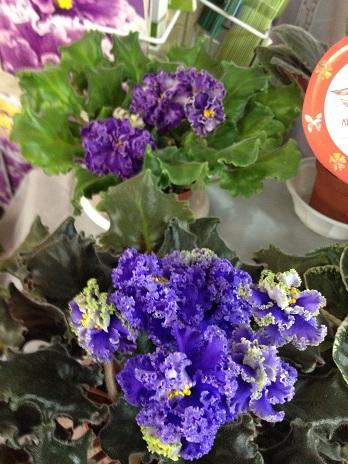Выставка цветов - Страница 2 C4f754618279