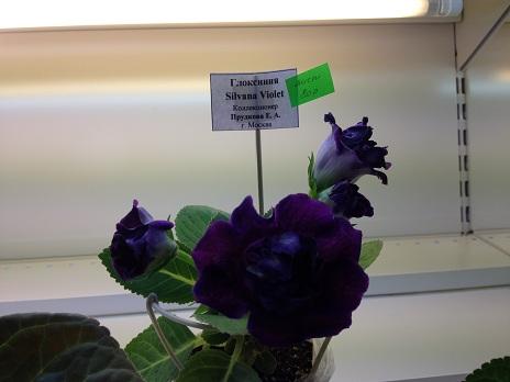 Выставка цветов - Страница 2 652810f8033d