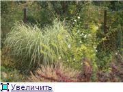Cад Людмилы Ивановой из черкасс D6489e990a5dt