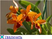 Sevgilim ( мои любимые) 2e64efb906eat