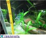 Черный (15 литров) Ed58ed31c4d2t