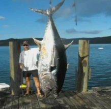 Рыбак случайно поймал гигантского тунца(фото, видео)  11af024870fb