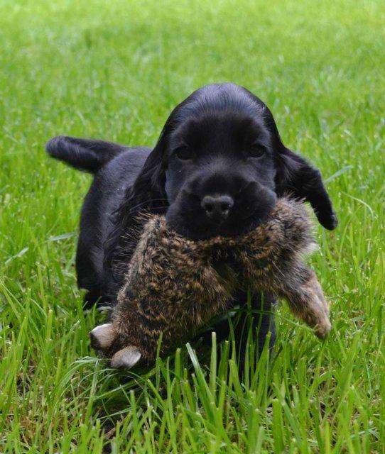 Собаки Татьяны Моисеенковой, кот Мензурка - Страница 4 C6b5f043d779