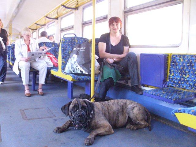 Собаки Татьяны Моисеенковой, кот Мензурка - Страница 7 B8392bc3fd36