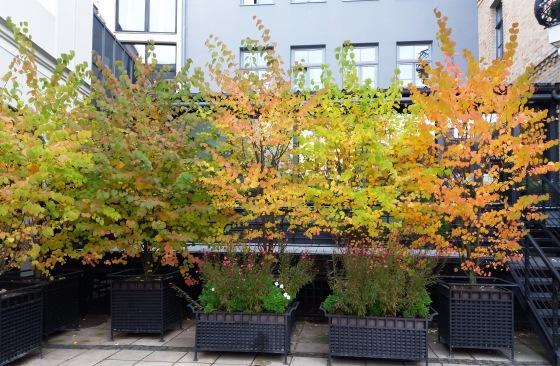 Осень, осень ... как ты хороша...( наше фотонастроение) - Страница 8 E7e4883faebe