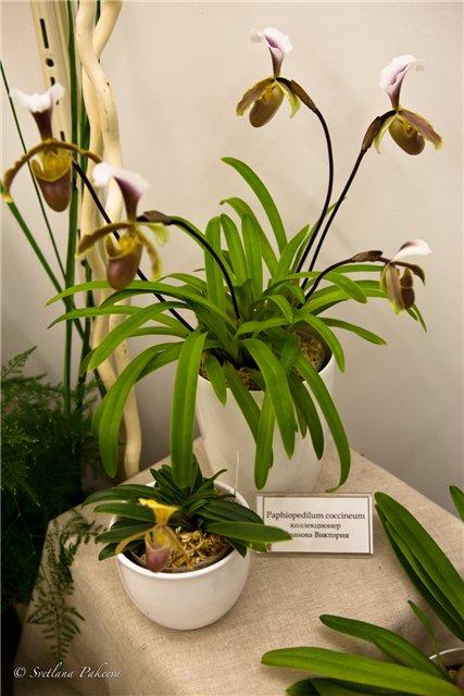 Выставка орхидей в Государственном биологическом музее им. К.А.Тимирязева 1317ee807b85