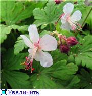 Моя Болгария. Рассказывает Eli4ka B33c952b6c74t