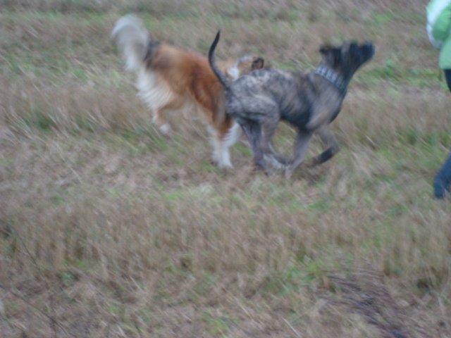 Собаки Татьяны Моисеенковой, кот Мензурка 351ec6368073