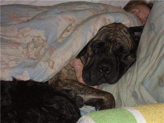 Наши собаки, друзья и гости, кот Мензурка - Страница 33 9a3e303a2fba