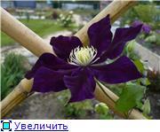 Цветущие лианы 922d8e9667d0t
