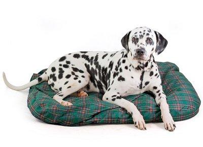 Интернет-магазин Red Dog- только качественные товары для собак! A8b092b1598b