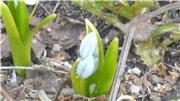 Весна идёт... - Страница 2 Cbe069b91722t