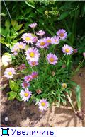 Растения для альпийской горки. B49bccd45e43t