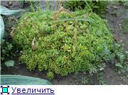 Растения для альпийской горки. 310a9c177d72t