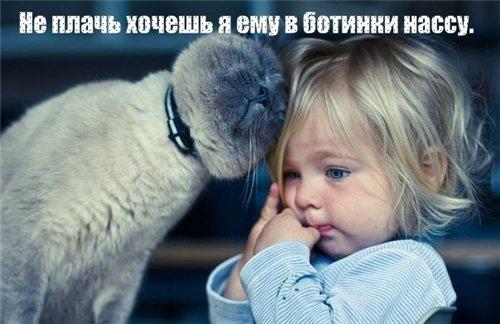Сама по себе гулёна (о кошках) - Страница 2 06ff26e9ec07