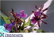 Sevgilim ( мои любимые) 883b2abf16f6t
