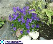 Растения для альпийской горки. Ffec925d4e53t