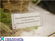 Выставка орхидей в Государственном биологическом музее им. К.А.Тимирязева Cbcbcc78541et