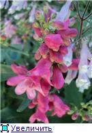 Растения для альпийской горки. - Страница 3 C79f115b28bbt