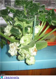 Spring Rose   (LLG) - Страница 3 226f9a11b70dt