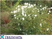 Cад Людмилы Ивановой из черкасс 11abed70c635t