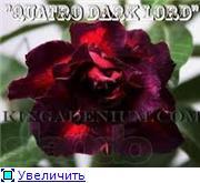 продам семена экзотических растений - Страница 3 F2c454d8f659t