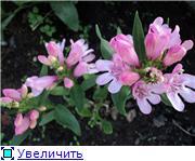 Растения для альпийской горки. - Страница 3 38a1d45a0d3at