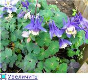 Растения для альпийской горки. - Страница 2 E33afa034fa0t