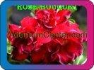 продам семена экзотических растений - Страница 3 B7b333e2018e